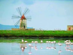 Fenicotteri rosa nelle saline di Nùbia / Pink flamingoes in the salt pans of Nùbia — Nature Reserve Trapani e Paceco  http://urly.it/26rf