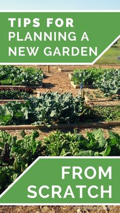 Backyard Vegetable Garden: Starting a vegetable garden is one of the most exciting things about spring! But it's not necessarily as simple buying some plants and sticking them in the ground. It helps to do some research and have a plan for what will really grow well for you. Gardening For Beginners   How To Grow   Homesteading