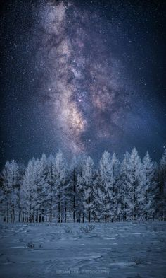 "thedemon-hauntedworld: "" Masaki Kaji Milky Way over a Winter Tree """