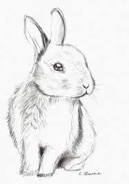 Bildergebnis für rabbit drawing