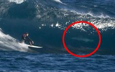 Fergal Smith, 21, was surfing two miles off the coast of Perth, Western Australia when the shark came within a few feet of him.