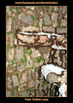 Bild 9 - Bau und Einrichtung Regenwaldterrarium mit Wasserfall - Um den Fliesenkleber zu verdecken wurden die Fugen mit Torf und Moos gefüllt.