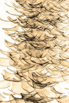 Inverted Reflection Abstract 5, by Craig Royal.