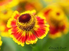 Blumenbild im Wunschformat Sonnenbraut im roten Tanzrock
