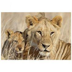 Affiche XXL Lionceau - 150 x 220 cm