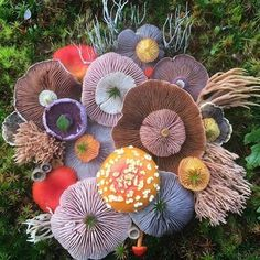 Happy mushroom Monday!  It's been raining here for nearly two weeks and I'm hoping that the mushrooms will start sprouting up soon! ✨ Divine photo from @jill_bliss