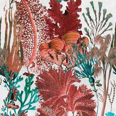 Mind the Gap Coral Reef Behang: Hier Verkrijgbaar WP20358 - Luxury By Nature Coral Wallpaper, Pattern Wallpaper, Coral Art, Nautical Design, Coral Design, Eclectic Design, Interior Design, Interior Ideas, Modern Design