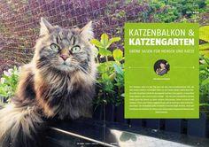 Grüne Oasen für Mensch und Katze - einfach schön https://cat-competence.de/katzen-momente/gruene-oasen-fuer-mensch-und-katze/