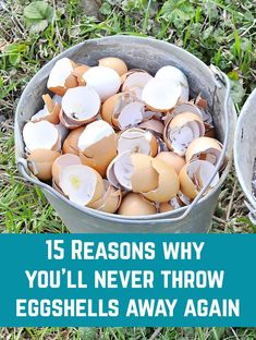 What do you do with your eggshells? If you throw them away or simply compost them, you're missing out on so many brilliant uses! Garden Yard Ideas, Lawn And Garden, Egg Shell Uses, Organic Gardening, Gardening Tips, Egg Shells In Garden, Garden Compost, Vegetable Garden Design, Garden Care