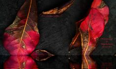 The Fallen Leaves on June
