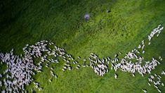 """Dupin, el creador de  Dronestagram , llevaba tiempo volando drones, """"como pasión personal"""", y de vez en cuando también hacía fotos y vídeos. """"Un día, mientras me hacía una foto de grupo con varios participantes de una conferencia en San Petersburgo (Rusia), un dron se acercó a nosotros. Y nos inmortalizó"""".  En la imagen, el segundo premio en la categoría de Naturaleza y Fauna de Dronestagram en 2016."""
