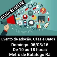 BONDE DA BARDOT: RJ: Projeto Resgate de Animais realiza campanha de adoção, em Botafogo, sempre aos domingos, das 10h às 18h