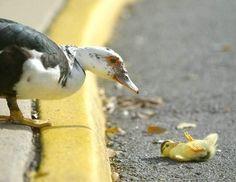 """""""Ma!  I felled!"""""""