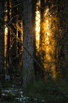 Tuomikylä, Finland