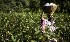 Behind the label: can we trust certification to give us fairer products? | Guardian Sustainable Business | The Guardian - http://www.theguardian.com/sustainable-business/2016/mar/10/fairtrade-labels-certification-rainforest-alliance