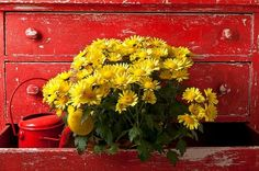 Daisy Plant In Drawers Photograph by Garry Gay - Daisy Plant In Drawers Fine Art Prints and Posters for Sale Daisy Art, Pink Gerbera, Yellow Cottage, Bastilla, Thing 1, Shades Of Red, Warm Colors, My Flower, Daffodils