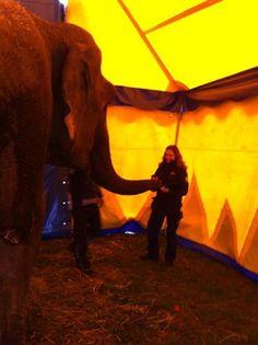 Photo: Inte det vanligaste djurslaget vi kontrollerar, men vid inbesiktning av cirkus idag mötte vi elefanterna som gärna hjälpte Paula att mäta utrymmet!