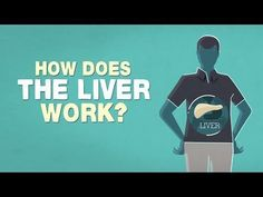 There's a factory inside you that weighs about 1.4 kilograms and runs for 24 hours a day. It's your liver: the heaviest organ in your body, which simultaneously acts as a storehouse, a manufacturing hub, and a processing plant. Emma Bryce gives a crash course on the liver and how it helps keep us alive.