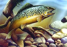 """Brook Trout"" by Tom Wood ♥Get 7-14% cash back shopping your favorite stores Online. Bass Pro Shops, Walmart, Home Depot, Sears, JC Penneys and more. Cash back on gas cards, airline tickets, and motels too! http://bit.ly/dublichurchanita ♥"