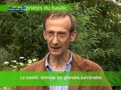 Les secrets du Basilic - YouTube