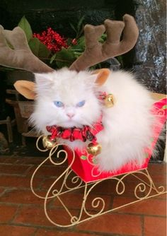 christmas cat- Google Search