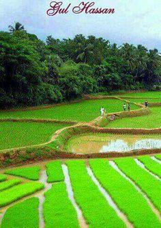 Beauty of the Punjab, Pakistan Azad Kashmir, Pakistan Travel, Paradise On Earth, Amazing Places, The Good Place, Asia, Heaven, Rice, Shades