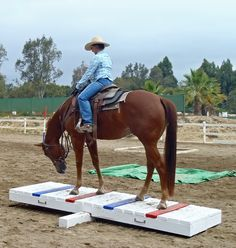 The most important role of equestrian clothing is for security Although horses can be trained they can be unforeseeable when provoked. Riders are susceptible while riding and handling horses, espec… Horse Exercises, Horse Games, Types Of Horses, Equestrian Outfits, Equestrian Fashion, Equestrian Style, Equestrian Problems, Obstacle Course, Horse Training
