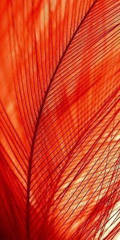 Feathery Orange