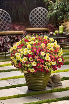Say hello to 'Aloha', a bright combination to liven up your outdoor summer space! http://emfl.us/CWLd