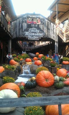 The best place ever!! Gatlinburg,TN! Moonshine and Wine are great there!