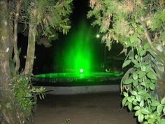 Garden and Lights