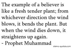 The example of a believer is like a fresh and tender plant.