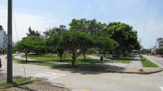 Un Parque en San Borja - Lima.