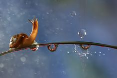 photo: Snail and the raindrops | photographer: VadimTrunov | WWW.PHOTODOM.COM