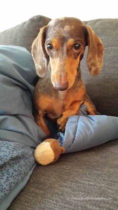 Gretel loves her nut!