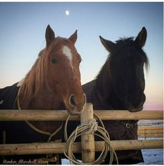The stars of Heartland. Heartland Season 9 #iloveheartland