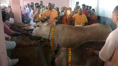 India state approves life term for killing cows in Gujarat