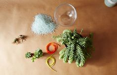 Learn how to make an unexpected summer terrarium with Flower Girl NYC!