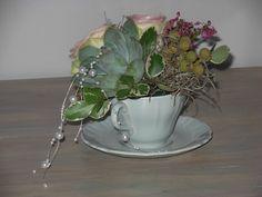 Succulence in a teacup