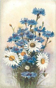 Cornflowers & Daisies. A. F. Armitage postcard. 1926/1927