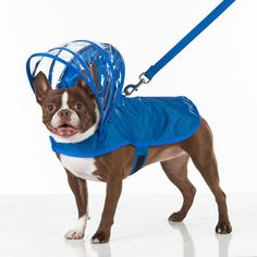 Does your dog needs a raincoat?