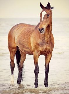 What color would you call this horse? Is it a dapple buckskin? Or a light bay?