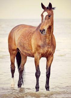 Bay horse so beatiful