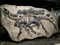 Fossilized in-ground Stegosaurus, Houston Museum of Natural Science | Flickr - Photo Sharing!