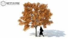 3D Model of Low poly 3d tree fall autumn (042)