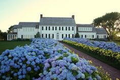 Cape Cod hydrangea house, Chatham MA Was called hydrangea walk. Hortensia Hydrangea, Hydrangea Garden, Flowers Garden, Beautiful Homes, Beautiful Places, House Beautiful, Simply Beautiful, Beautiful Gardens, Drought Resistant Plants