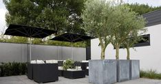 Image result for large pots on roof top garden