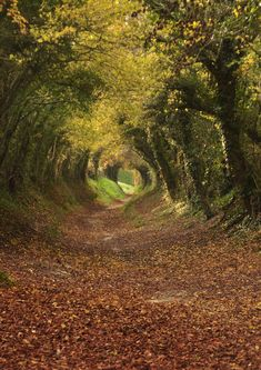 ✯ Footpath to Halnaker Mill, West Sussex.