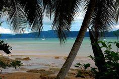 Photo Gallery: Playa Dominical & Drake Bay, Costa Rica: Drake Bay Pictures: Drake Bay Palms