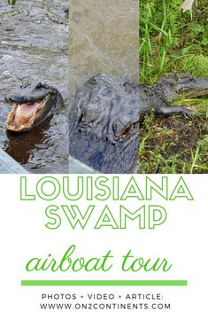 Amazing tour of the Louisiana swamp in airboat - pure thrill. Learn more in this article. #louisiana #swamptour #airboattour #nola #alligatortour #neworleans #usa #familytravel #daytrip #on2continents #travelblog #boattrip Bald Cypress Tree, Cypress Trees, Best Places To Travel, Places To See, Travel Couple, Family Travel, Airboat Rides, Louisiana Swamp, Boat Tours